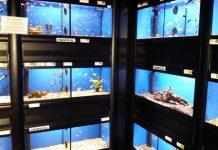 Como Montar Uma Criação de Peixes Ornamentais