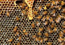 Como Montar Uma Criação de Abelhas