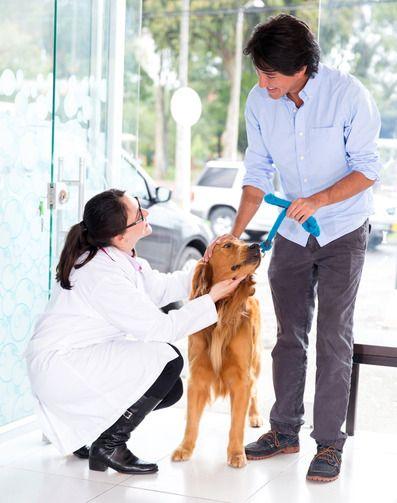 Clínica de Estética Para Animais - Ideia Criativa Para Ganhar Dinheiro