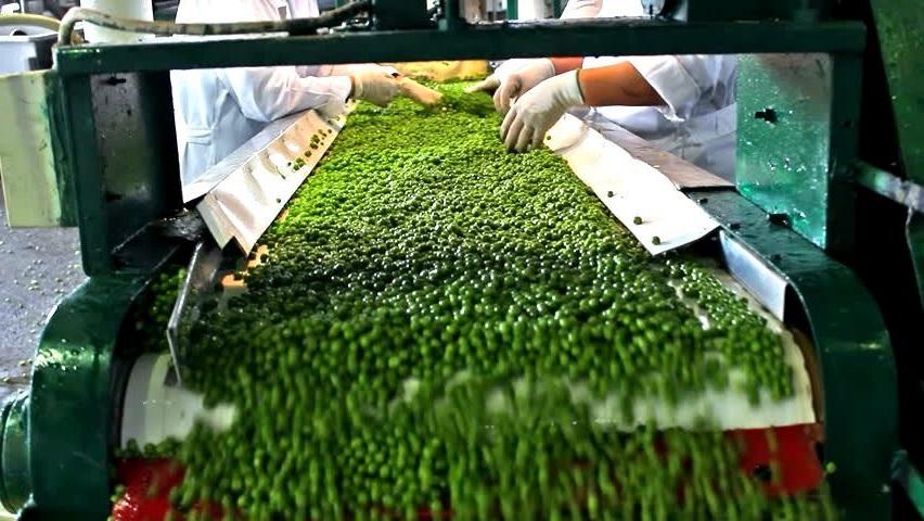 Como Abrir Uma Empresa de Beneficiamento de Legumes