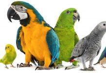 Criação de Aves Ornamentais