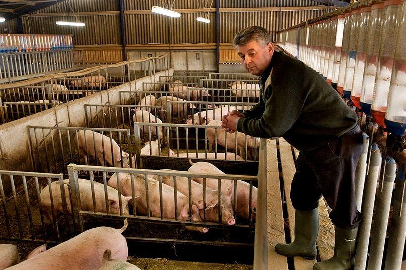 Profissionais da Criação de Porcos