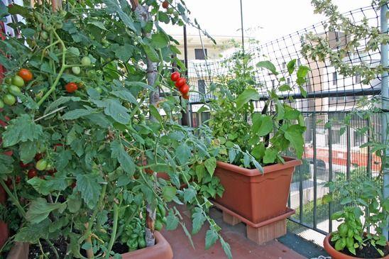 Abrir um Negócio de Comércio de Muda de Plantas