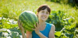 7 Passos Fáceis de Como Plantar Melancia