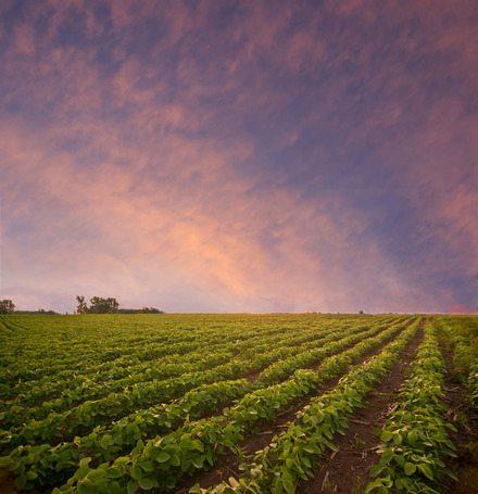 Como Fazer o Plantio de Soja