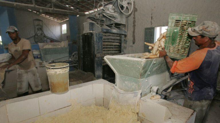 Como Montar Uma Fábrica de Farinha de Mandioca Passo a Passo