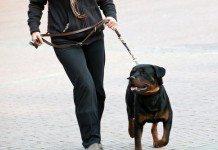 Como Ser Um Dog Walker