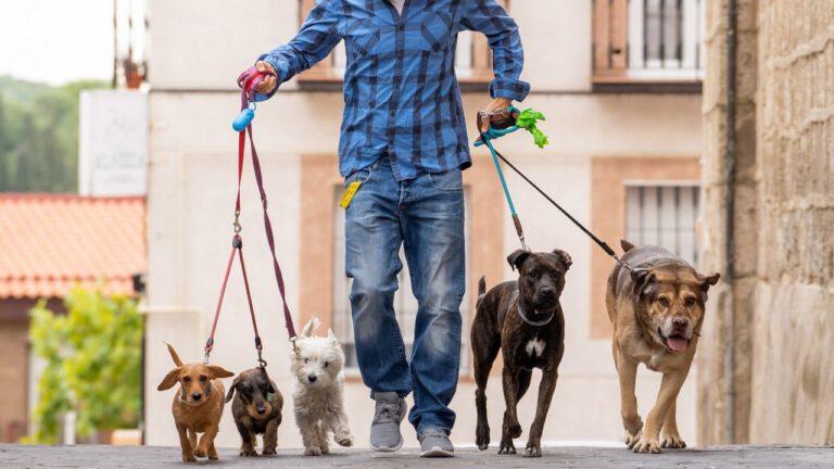 Como Ser Um Dog Walker – Guia Completo com Preços e Ganhos