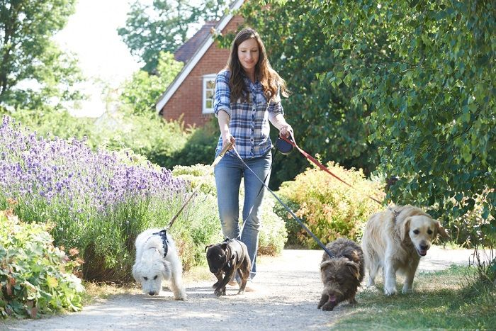 dogwalker-vantagens-desvantagens