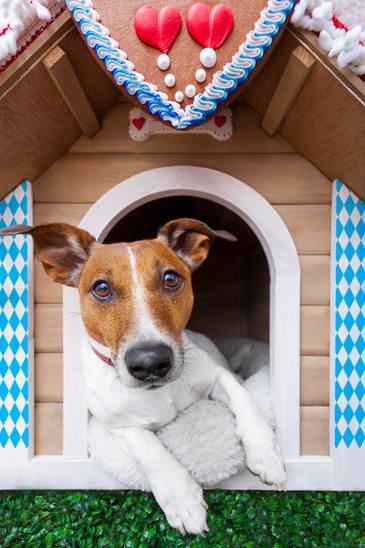 100% pet Franquia – Petshop e Cuidados com Animais